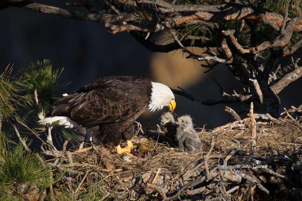 Cornell Nature Photography