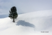 Scenic;Snow;Tree;Winter-Yellowstone-National-Park;Yellowstone-National-Park;Yell