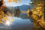 Aspens;California;Eastern-Sierra;Foliage;Silver-Lake