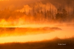 Fog;Madison-River;Mist;Sunrise;Yellowstone-National-Park;water