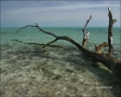 Water;Beach;Driftwood;Waves;Tropical;Blue-Sky