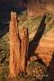 Canyon-de-Chelly;Cottonwoods;Slick-Rocks;Canyon;Arizona;Spider-Rock;Red-Rocks;Su