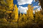 Bishop-Creek-Canyon;California;Eastern-Sierra;Fall-Foliage
