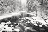 Merced-River;Snow;Tree;Yosemite-National-Park
