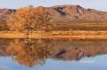 Scenic;Tree;Reflection;Mountain;Bosque-del-Apache;Water;Clouds