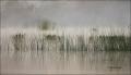 Florida;Southeast-USA;Fog;Scenic;Wetlands;Grass
