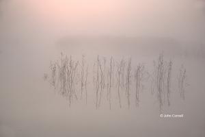 Dawn;Fog;Marsh;Merced-National-Wildlife-Refuge;Merced-National-Wildlife-Reserve;