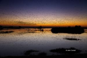 Marsh;Merced-National-Wildlife-Refuge;Red-Sky;Reflection;Rosss-Goose;Scenic;Snow