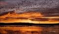 New-Mexico;Southwest-USA;Bosque-del-Apache;Sunrise;Snow-Goose;Chen-caerulescens;