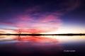 Snow-Goose;Goose;Chen-caerulescens;Scenic;Sunrise;Bosque-del-Apache;New-Mexico;W