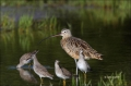 Long-billed-Curlew;Curlew;Numenius-americanus;one-animal;close-up;color-image;no